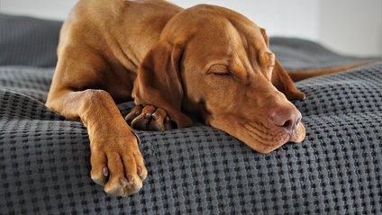 як спати у спекотну ніч - фото 1
