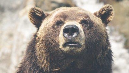 Ведмідь вирішив відпочити у басейні американки (відео) - фото 1