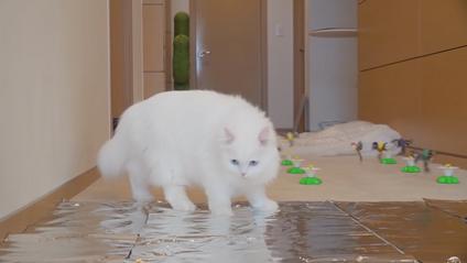На домашніх улюбленців очікував котячий триатлон - фото 1