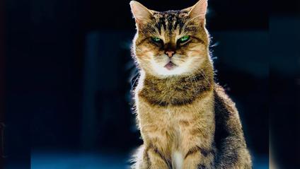 Кішка Глі – зірка Айя-Софії у Стамбулі - фото 1