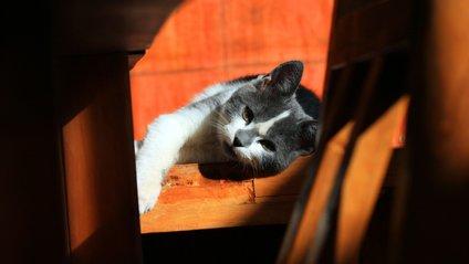 Як потролити котів - фото 1