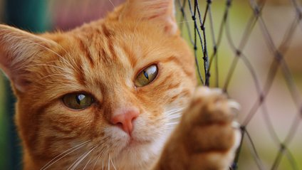 Кіт у шоці від поведінки господаря - фото 1