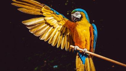 Як виглядає прогулянка з папугами - фото 1