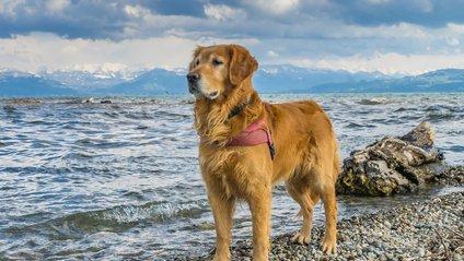 Дуже схвильований собака - фото 1