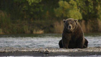 Ведмідь хотів покататись на авто, але все пішло не за планом - фото 1