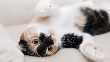 Кіт розвеселив Reddit - фото 1