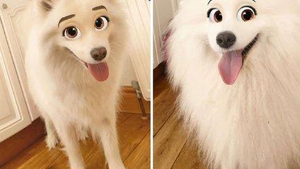 Новий фільтр Snapchat перетворює домашніх тварин у персонажів Disney (фото) - фото 1