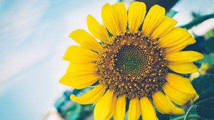 Рецепт насіння соняшника - фото 1