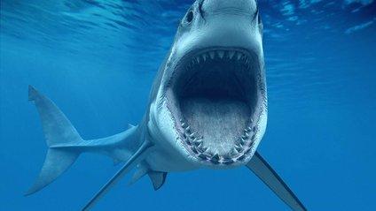 Акула-людоїд вчепилася у човен і відкусила шматок гвинта: відео не для слабкодухих - фото 1