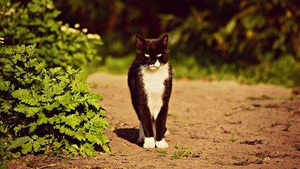 Балакучий кіт - фото 1
