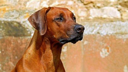Типовий собака виглядає так: кумедне відео - фото 1