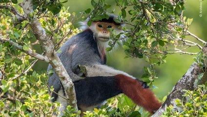 13-річний фотограф зняв рідкісного примата - фото 1