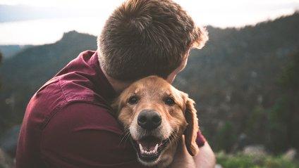 Домашні тварини знімають стрес - фото 1