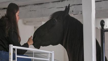 У Великобританії відкрився готель, в якому можна провести ніч в стійлі з кіньми - фото 1