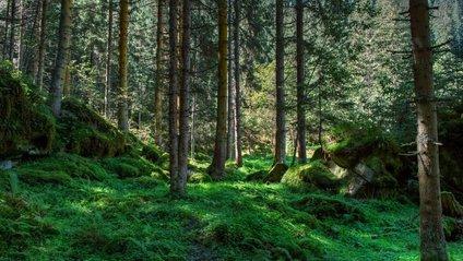 Звуки лісу - фото 1