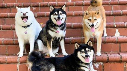 Собака, який псує всі фото - фото 1