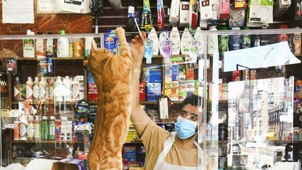 Хлопець публікує кумедні фото котів, які відпочивають у магазині - фото 1