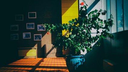 Життя кімнатних рослин - фото 1