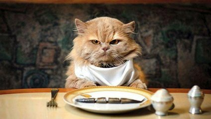 Як часто потрібно годувати кота - фото 1