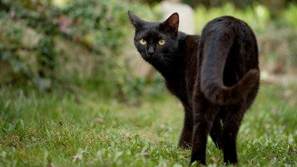 Чому не варто жартувати з котами - фото 1