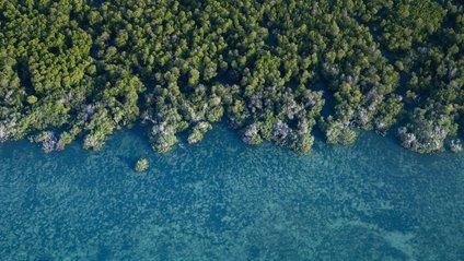 Мангрові ліси у Мексиці - фото 1