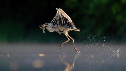 British Wildlife Photography Awards: вибрано 15 найкращих фотографій тварин за десятиліття - фото 1