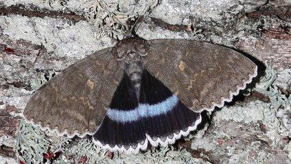 У Чорнобилі помітили метелика значних розмірів: фотофакт - фото 1