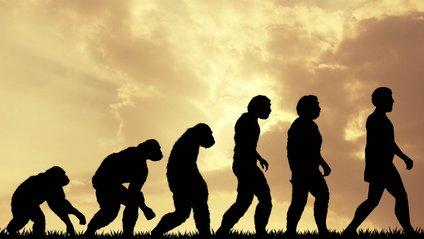 Зникнення зубів мудрості і поява нової артерії: учені розповіли про нову стадію еволюції - фото 1