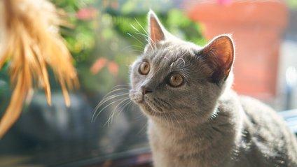 Як зробити красиві фото з котом - фото 1