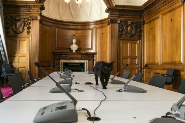 Мінфін Британії влаштував на роботу кота  - фото 97006