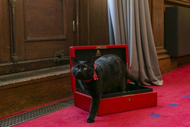 Мінфін Британії влаштував на роботу кота  - фото 97007