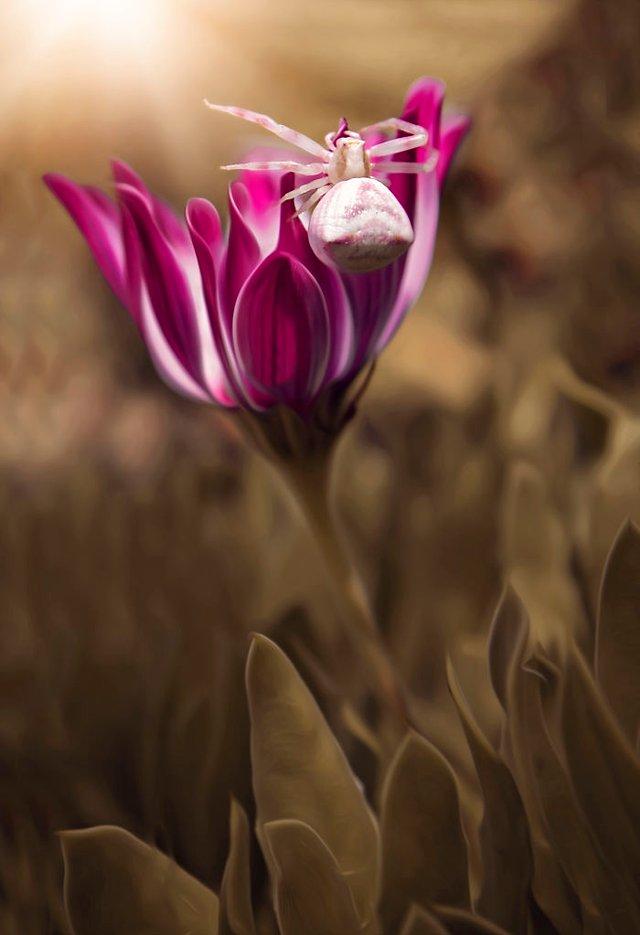 Макрофотографії природи від Діни Телхамі, які заворожують - фото 290938