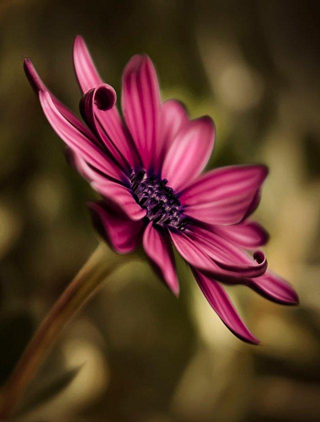 Макрофотографії природи від Діни Телхамі, які заворожують - фото 290939