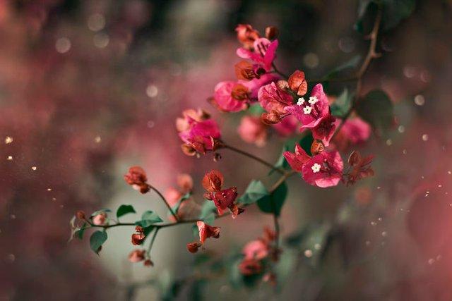 Макрофотографії природи від Діни Телхамі, які заворожують - фото 290942