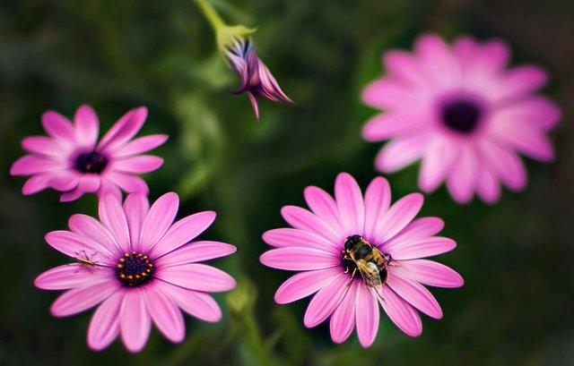 Макрофотографії природи від Діни Телхамі, які заворожують - фото 290944