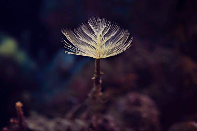 Макрофотографії природи від Діни Телхамі, які заворожують - фото 290946