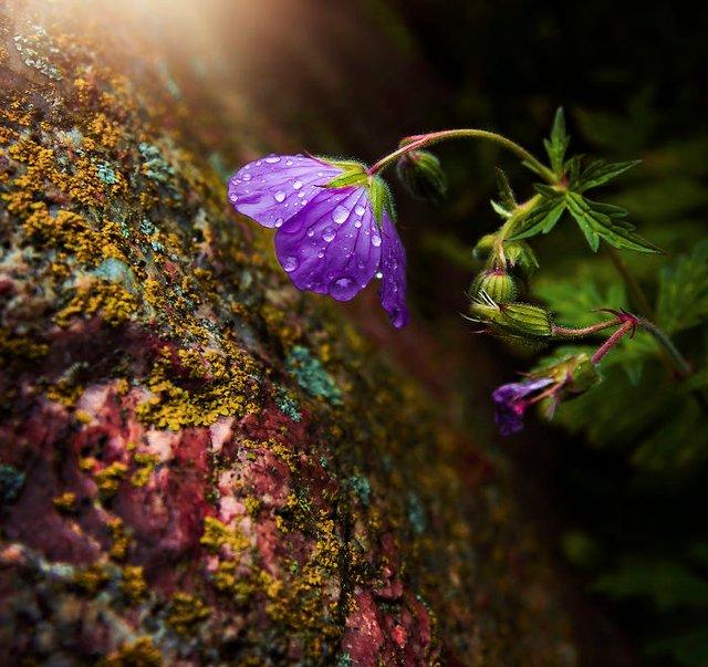 Макрофотографії природи від Діни Телхамі, які заворожують - фото 290948