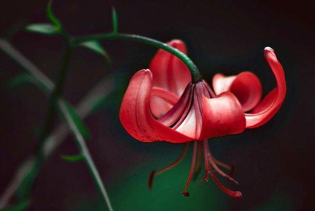 Макрофотографії природи від Діни Телхамі, які заворожують - фото 290952