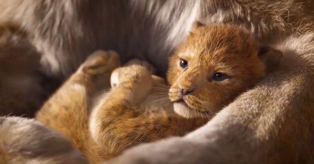 Король Лев: у мережі порівняли анімацію фільмів 1994 та 2019 років - фото 291013