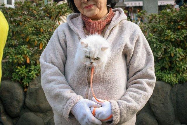 Незвичайні моменти щоденного життя в Японії: яскраві фото - фото 292823