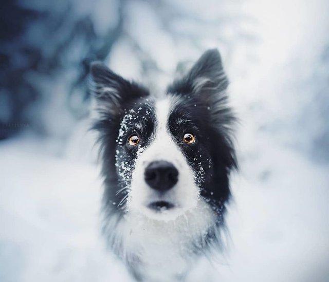 Собаки та подорожі: затишні фото, які змушують усміхнутись - фото 292840