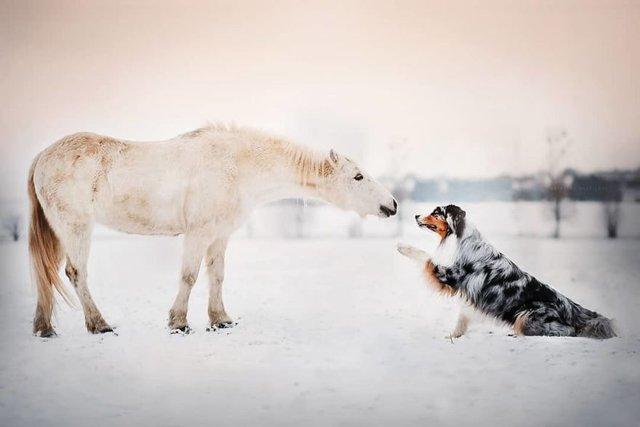 Собаки та подорожі: затишні фото, які змушують усміхнутись - фото 292841