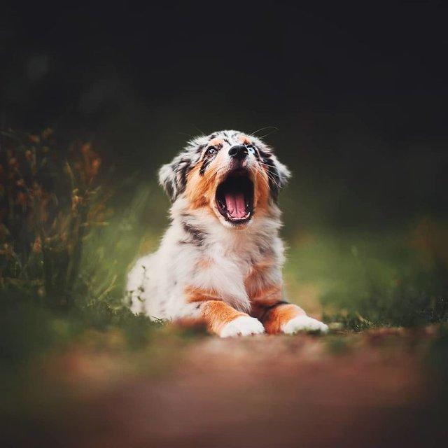 Собаки та подорожі: затишні фото, які змушують усміхнутись - фото 292842