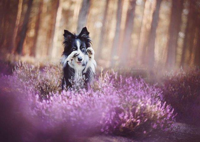 Собаки та подорожі: затишні фото, які змушують усміхнутись - фото 292843