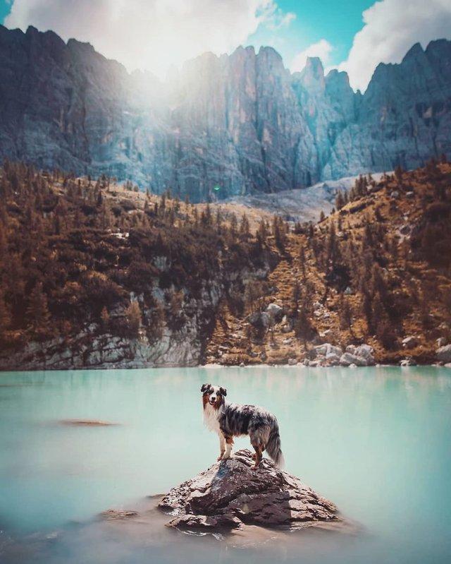 Собаки та подорожі: затишні фото, які змушують усміхнутись - фото 292844