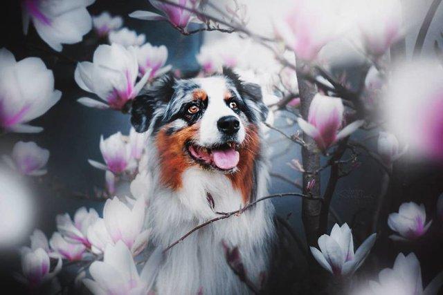 Собаки та подорожі: затишні фото, які змушують усміхнутись - фото 292846