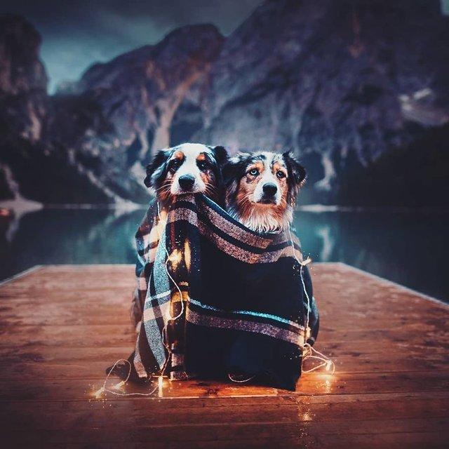 Собаки та подорожі: затишні фото, які змушують усміхнутись - фото 292848
