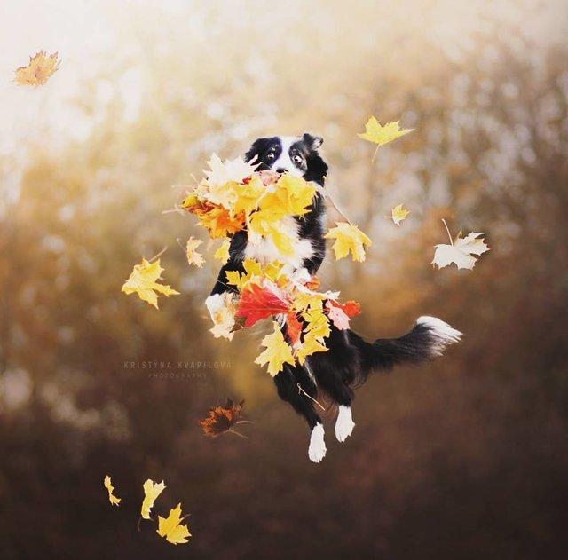 Собаки та подорожі: затишні фото, які змушують усміхнутись - фото 292850