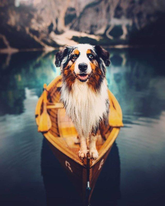 Собаки та подорожі: затишні фото, які змушують усміхнутись - фото 292851