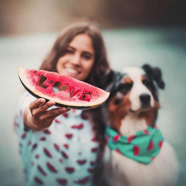 Собаки та подорожі: затишні фото, які змушують усміхнутись - фото 292852